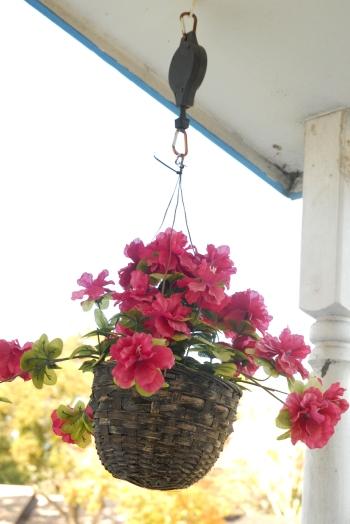 flower blog 4